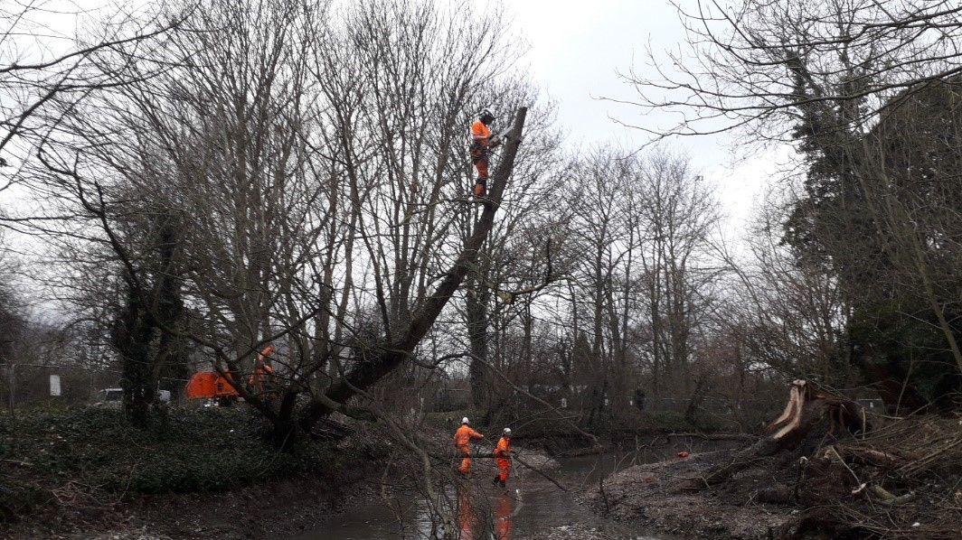 The tree works team 'pollarding' a heavily leaning willow tree. This will prolong the life of the tree and allow more provide more light along the river channel.