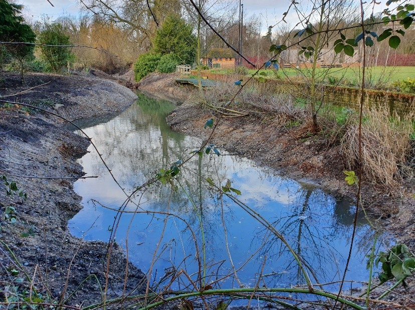 The restored backwater after regrading the bed and banks. This will keep it connected to the new water levels in the river