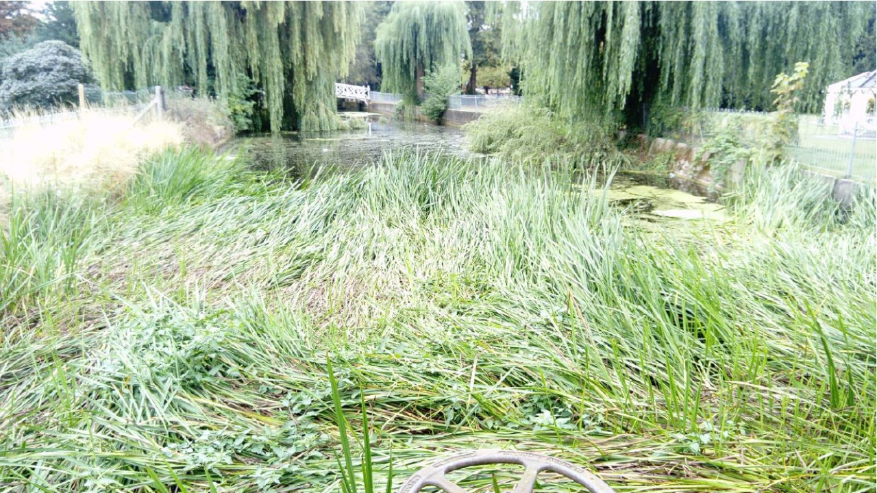 Channel upstream of weir was choked with reeds where tree cover was low