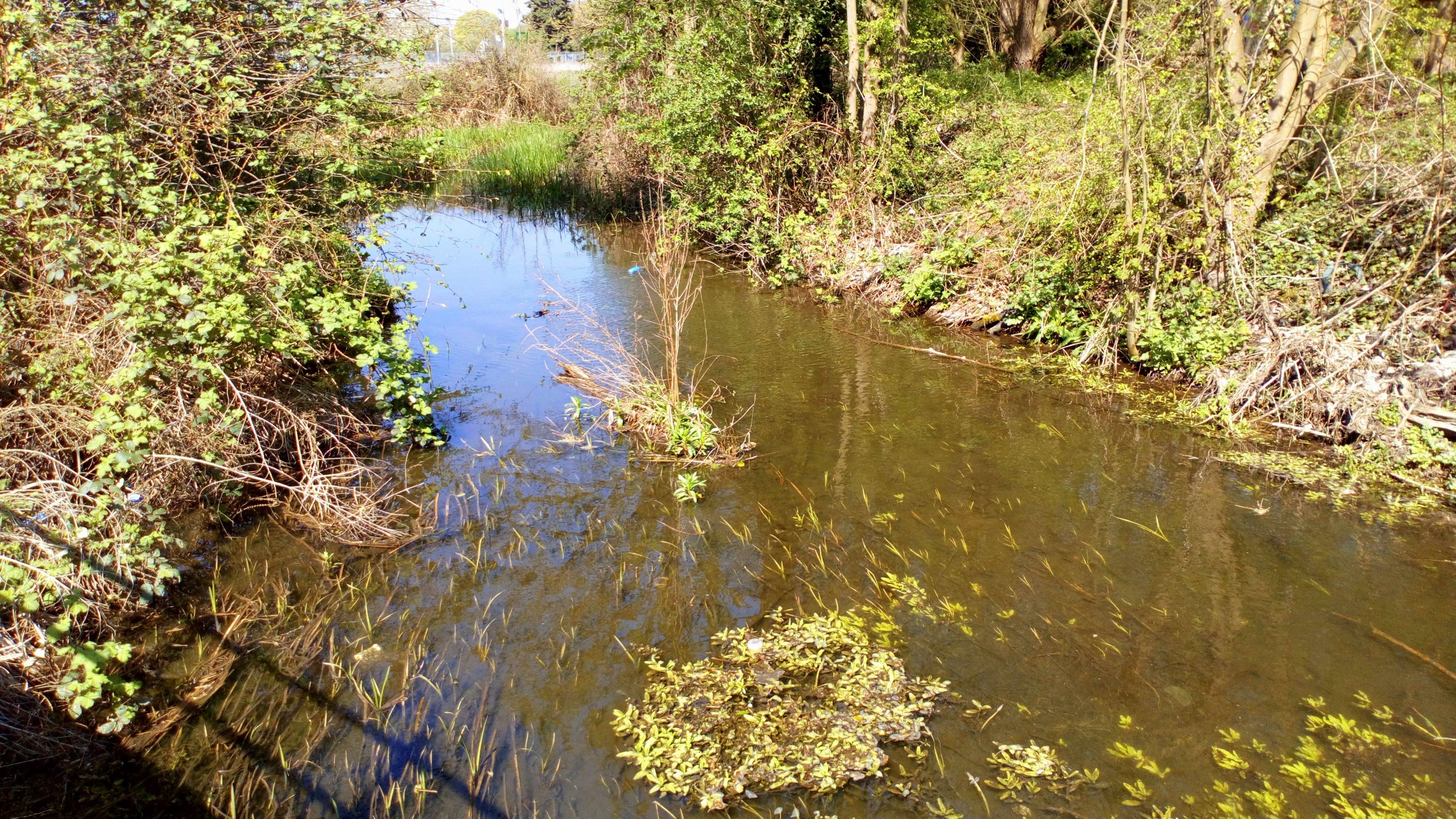 Waist deep silt deposition 650m upstream from the weir