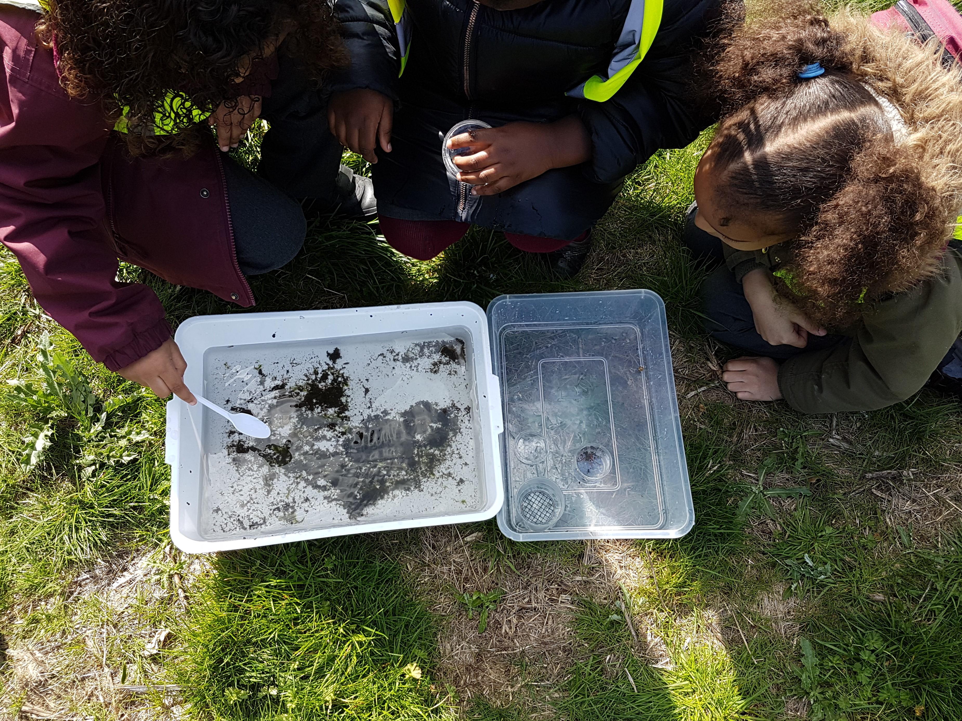 River Wildlife - exploring the sample tray