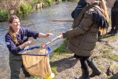 River Wildlife - river dipping