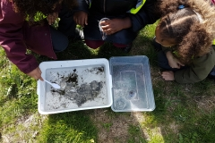 River Wildlife - exploring the sample tray