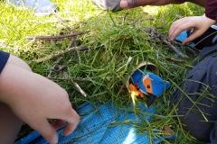 River Wildlife KS1 - create a habitat